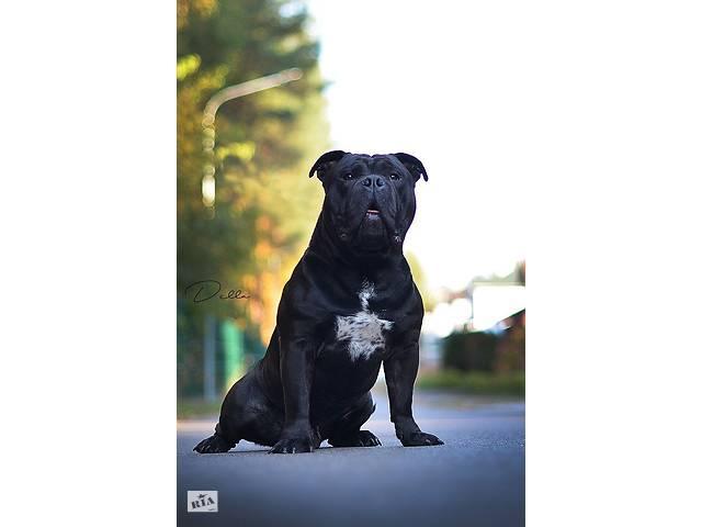 купить бу Продам собаку  в Киеве