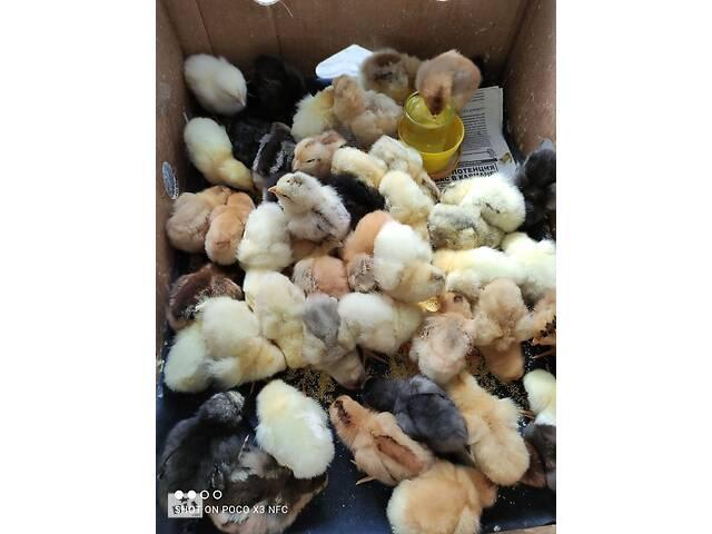 Продам цыплят, утят, гусят, индюшат!- объявление о продаже  в Херсоне