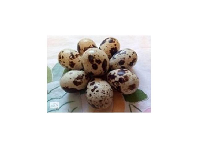 купить бу Продам инкубационные яйца и молодняк перепелов в Новой Одессе