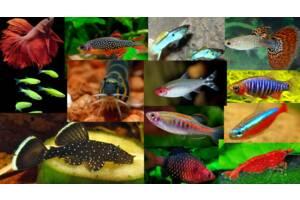 Рыбки для хорошего настроения