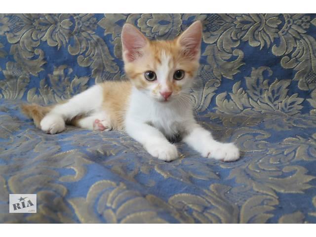купить бу Рыжие солнечные котята в Киеве