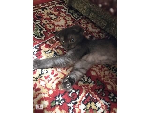 Шотландский вислоухий котик- объявление о продаже  в Харькове
