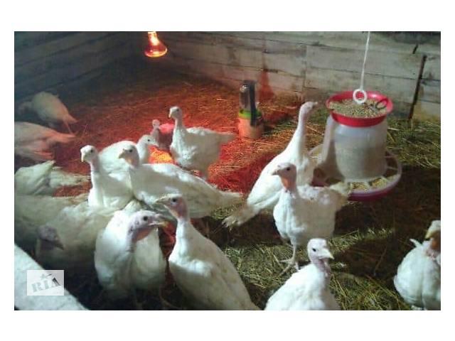 бу Инкубационные яйца разных видов птицы (кури, утки, гуси, индюки) из Венгрии. Выход 86% в Харкові