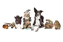 Услуги для животных (общее)