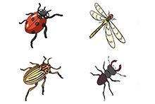 Комахи і членистоногі