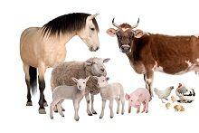 Вітаміни для сільськогосподарських тварин