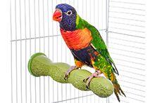 Товари для папуг і птахів
