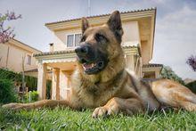 Охранные и сторожевые собаки