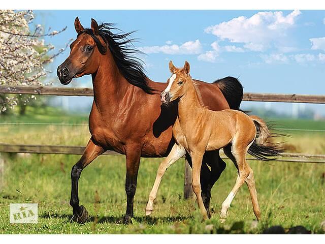 купить бу Куплю лошадь в Могилевской области
